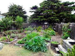 spinach-prosperity